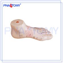 PNT-AM26 modelo anatômico do modelo 15cm do pé humano da acupuntura