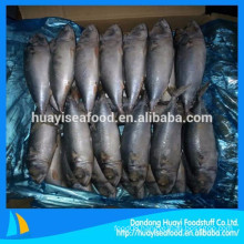 All sizes whole round Frozen mackerel fish