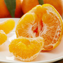 New Coming Fresh Organic Navel Oranges