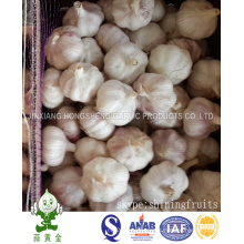 Alho branco normal fresco 5,5 centímetros 10kgs Loose Carton