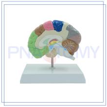 ПНТ-06121 здоровья человека половины мозга модель для школы