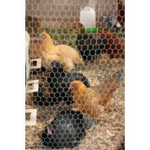 """1/2"""" Chicken Wire"""