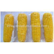 Longo prazo de fornecimento de alta qualidade congelados iqf espiga de milho doce
