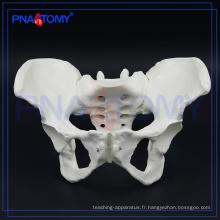 PNT-0112 modèle d'os du bassin féminin pour l'hôpital