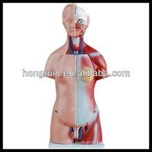 ISO 45CM Modèle de torse anatomoïde à double sexe avec organes internes 23parts