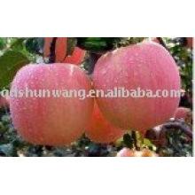 Pomme Fuji fraîche chinoise, fruit à la pomme