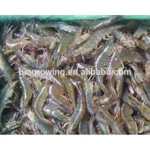 Heißer Verkauf gute Funktion Tierfutter für Garnelen