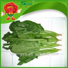 China proveedor Marcas de espinacas frescas a granel