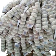 Fresh red garlic natural garlic buyers wholesale garlic price