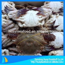 supply whole round frozen new landing blue swimming crab
