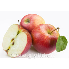 Golden Supplier for Chinese Fresh Red Apple