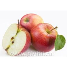 Fornecedor dourado para a maçã vermelha fresca chinesa