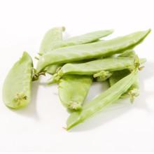 2021 New Season Fresh Good Quality And Low Price Green Snow Pea