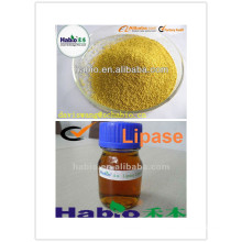 Lipase Enzyme Detergent