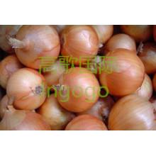 Export Frische Gemüse Gute Qualität Gelbe Zwiebel