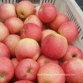 2016 New Crop Fresh Red Gala Apple