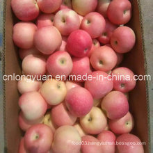 20kg Carton New Fresh Red Gala Apple