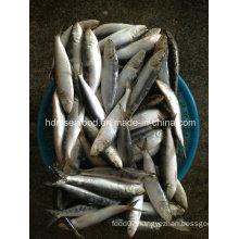 Frozen Sardine Seafood Fish for Bait