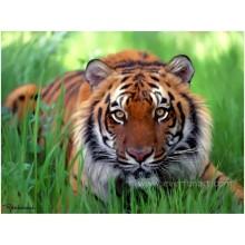 Tier Tiger Malerei für zu Hause dekorative