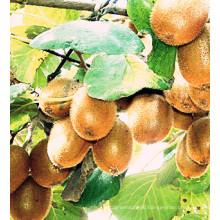 Best-Selling New Crop Export Good Quality Fresh Kiwi Fruit
