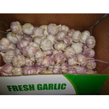 New Fresh Garlic High Quality Meilleur prix