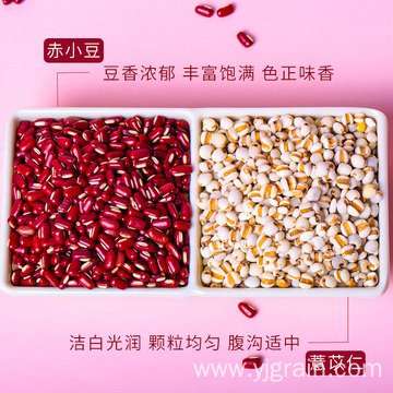 Wholesale Agriculture Products Red bean powder semen coicis