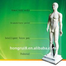 Modèle de point d'acupuncture intelligente intelligente homme-corps