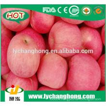 Fuji Apple for Bangladesh