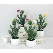 mini plantes succulentes / mini-cactus décoratif pour la maison bonsaï