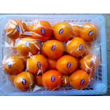Delicioso Fruta Primeira Navel Qualidade Laranja