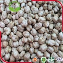 Getrocknete reine natürliche Kabuli Kichererbsen