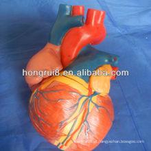 Modelo de coração ISO Jumbo, modelo de coração anatômico, modelo de coração médico