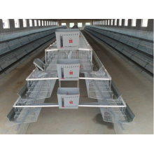 Automatic poultry nipple drinking system