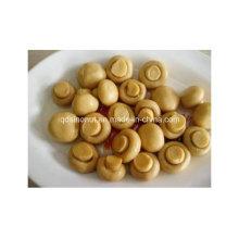 2016 Crop Canned Mushroom Whole