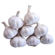 new season  garlic lowest price of shandong garlic jinxiang garlic
