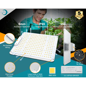 100W LED Grow Lampe Full Spectrum