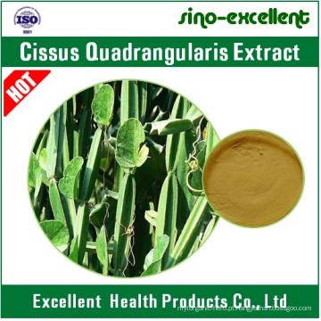 5: 1, 10: 1 Natural Cissus Quadrangularis Extract Powder