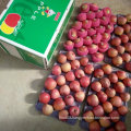 Top Quality of Fresh Red Qinguan Apple