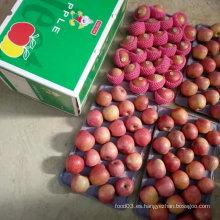 Calidad superior de manzana Qinguan roja fresca