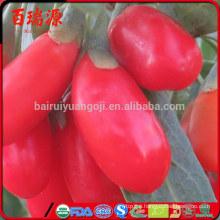 Dried goji berries goji berry fiyat dried goji anti -cancer food