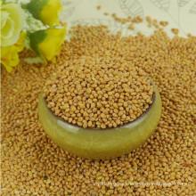 yellow broom corn millet grains millets