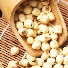 Organischer Lotus Samen Chinesischer Samen Nelumbini