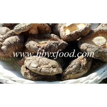 Grado un hongo shiitake secado natural