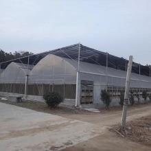 Filem Plastik Multi Span Greenhouse