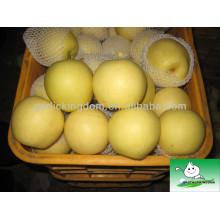 China Pera dourada fresca, fruta da pera