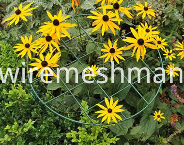 grow-through-support-rudbeckia-hirta