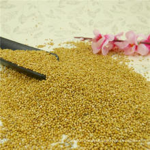 New High Quality Yellow Millet In Husk