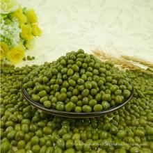 Granos de mung verdes de calidad alimentaria