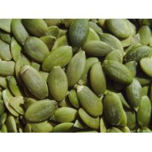 Gws Pumpkin Kernel Seed the best grade