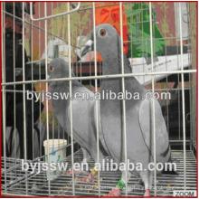 Hot Sale New Design Pigeon Crates À Venda